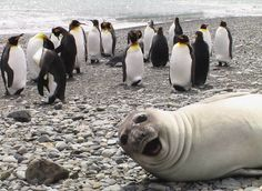 Seal photobomb!