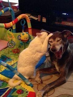 Просто кот, рассказывающий псу анекдот.