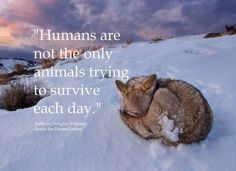 Humans are not the only animals trying to survive each day.