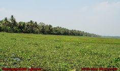 Kerala backwaters brackish lagoons