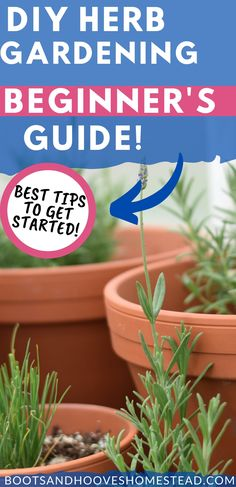 DIY herb garden ideas for beginners. Getting started with the basics of growing your own herbs. And the best tips for growing culinary herbs and medicinal herb gardens. #garden #herbs Indoor Gardening Supplies, Container Gardening, Healing Herbs, Medicinal Herbs, Diy Herb Garden, Garden Ideas, Kitchen Herbs, Vegan Kitchen, Kitchen Recipes