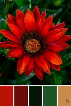 ZJ Colour Palette 593 #colourpalette #colourinspiration