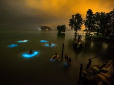 Bioluminescent phytoplankton surround swimmers in Krabi, Thailand, in circles of brilliant blue light in this National Geographic Photo of the Day.