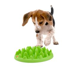 Green Slow Feeder wish I had this when Ryder was a puppy he would eat soo fast!! And then get sick