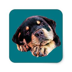 Rottweiler Puppy Love Rott Dog Canine German Breed Square Sticker - love gifts cyo personalize diy
