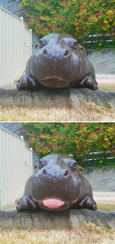 Cute Animal With It's Tongue Sticking Out