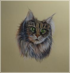#animals #blueeyes #cansonpaper #cat #coloredpencils #commission #commissionedart #drawing