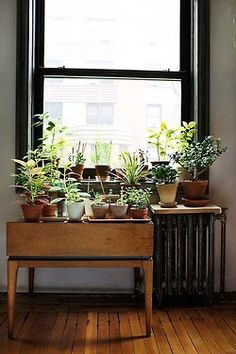 Have been trying to figure out what to do with my window-o-plants. ...