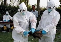 Avian Flu Can Become More Dangerous In Future – Possibility Of Airborne Version - Avian influenza normally infects birds but it has been transmitted from birds to humans quite often. What is even more alarming is that a new paper has been published on this disease which concludes that the virus behind this influenza may mutate in the coming days so that it may become airborne and will then be transmissible from one human to another. [Click on Image Or Source on Top to See Full News]