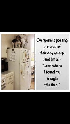 """Click visit site and Check out Cool """"Beagle"""" T-shirts. This website is outstanding. Tip: You can search your name or your favorite shirts at search bar on the top."""