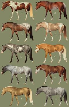 Adoptables by BH-Stables on DeviantArt Types Of Horses, Horses And Dogs, Animals And Pets, Pretty Horses, Beautiful Horses, Horse Color Chart, Arte Equina, Horse Coat Colors, Horse Markings