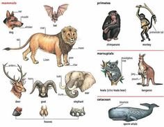Learning English with pictures - Animals