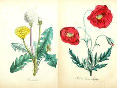 Hace unos meses compartí unas láminas botánicas, aquí , que os gustaron mucho y he estado recopilando una nueva serie que espero que os g...