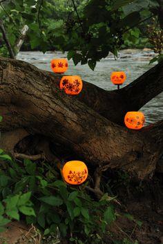 Beautiful Glowing Orbs of Beeswax!  Honeypots on the Oconee #River #AthensGA