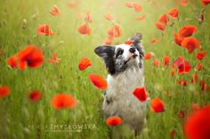 Adorable Dog Photography That Will Make You Happy by Alicja Zmyslowska - My Modern Met
