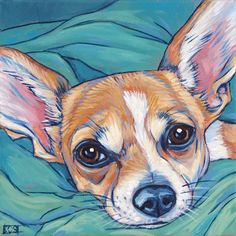 Lola the Chihuahua Dog in Teal Blankets by Bethany.