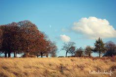 Lovely autumn colours in Richmond park │London