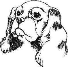 drawing of cavalier king charles spaniel