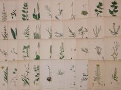 undefined40 x Antique 19th c Hand Coloured Sowerby Botanical Engravings - A38