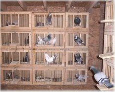 Pigeon nest fronts - Google Search