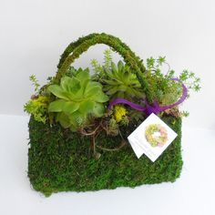 Succulent Stuffed Purse  Centerpiece for Showers by sosucculent, $36.00