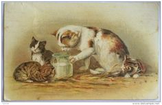 CATS CAT AND KITTENS DRINKING MILK 1925
