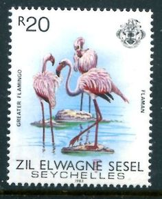 ZIL Elwannyen Sesel 65 MNH 1983 Bird Greater Flamingo SCV $11 50 X11001 | eBay Greater Flamingo, Horn Of Africa, British Indian Ocean Territory, Postage Stamp Art, Wild Creatures, East Africa, Stamp Collecting, Seychelles, Pretty In Pink