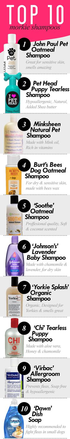The Top 10 Best Morkie/Yorkie/Maltese Shampoos!
