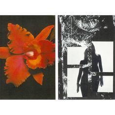 Yoni . . . #analogcollage #visualart #devi #collagecollectiveco #yoni #senseawakening #collageart #stephaniewild
