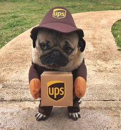 What the UPS acronym really stands for...