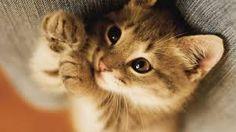 Bildresultat för kattungar