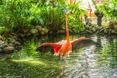 Bird Dance | Viagem à República Dominicana - Junho de 2014 | Dreams Punta Cana Resorts & Spa - Punta Cana.