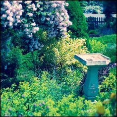Polly's garden when it was still her's. Le sigh. Portland, Maine.