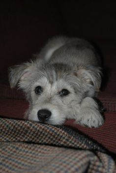 Stella as a pup. Her hair sure has changed!
