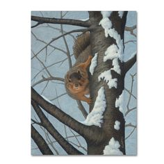 Robert Wavra 'What's Going On - Fox Squirrel' Canvas Art