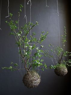 next project... string gardening