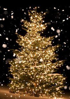 American Dollar, Christmas Tree, Holiday Decor, Home Decor, Teal Christmas Tree, Decoration Home, Room Decor, Xmas Trees, Christmas Trees