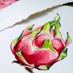 pipshining: { tutti frutti } dragon fruit illustration