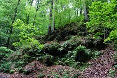 Wehlen \ Sächsische Schweiz in Germany.