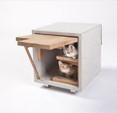 Cutting edge architecture ... for cats