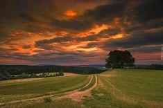 Droga, Łąki, Drzewa, Zachód słońca
