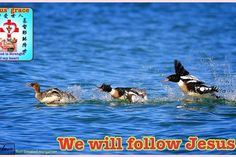 New slideshow: I Love You , Lord Jesus 7/8/2014