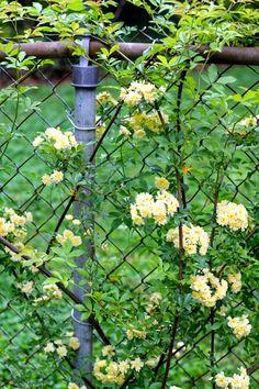 Meet me in the Garden: April 2014 blooms