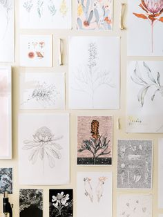 Art Inspiration: Botanical Illustrations By Edith Rewa — The Design Files Botanical Drawings, Botanical Art, Branding, Illustration Blume, No Rain, The Design Files, Motif Floral, Floral Illustrations, Art Plastique