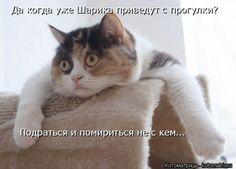 Новые котоматрицы – лучшие за неделю)))