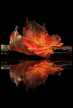 "crescentmoon06: "" autumn colors by Aida Ianeva """