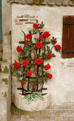 Rambling red rose at a half-round trellis