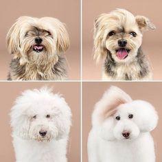SÉRIE DE FOTOS MOSTRA CÃES COM PENTEADOS MELHORES QUE O SEU #dog #pet #cao #cachorro #tosa