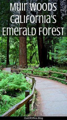 A tree canopy of Redwoods, moss covered forest floor and a boardwalk following a gentle creek… check out Muir Woods in Northern California!