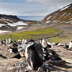 Mehr Moos: Klimawandel macht Antarktis grüner - SPIEGEL ONLINE - Wissenschaft